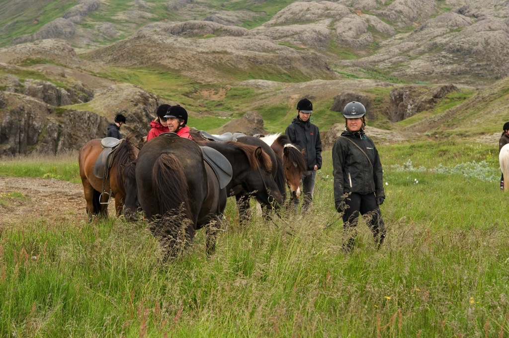 horseback riders and Icelandic horses taking break in green grass landscape close to river canyon Iceland