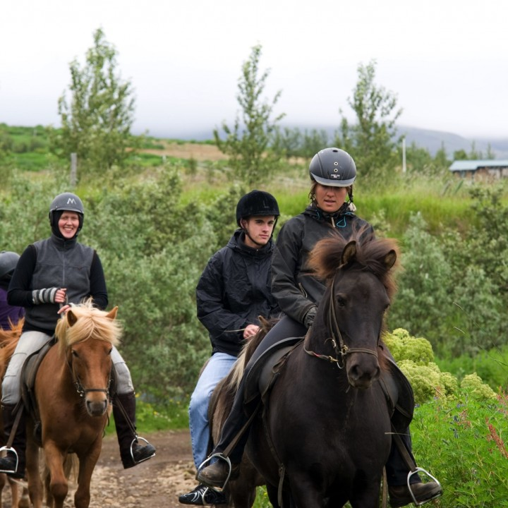 horseback-riding-tour-iceland-laxness-720x720.jpg